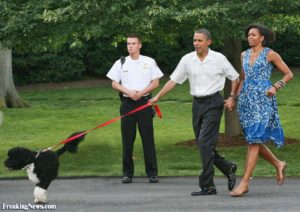 WASHINGTON - JUNE 8: (AFP OUT) U.S. President Barack Obama and first lady Michelle Obama walk first dog Bo to a picnic for members of Congress on the South Lawn of the White House June 8, 2010 in Washington, DC.. The first dog Bo was in tow. Alaskan Salmon smoked on an open pit was served for dinner. (Photo by Gary Fabiano-Pool/Getty Images)